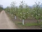 Обява Продавам разработен бизнес -имот-ранчо-ябълкова градина