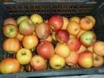 Обява продавам ябълки