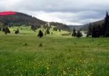 Обява Продава се гора в Хайдушки поляни
