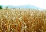 Обява Купувам земеделска земя в областите Монтана, Враца и Вид