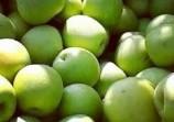 Обява Ябълки от млада градина на 7 години