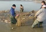 Обява Продавам риба - шаран и толстолоб