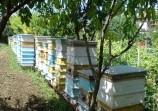 Обява Венета Димитрова продава натурален, пчелен мед