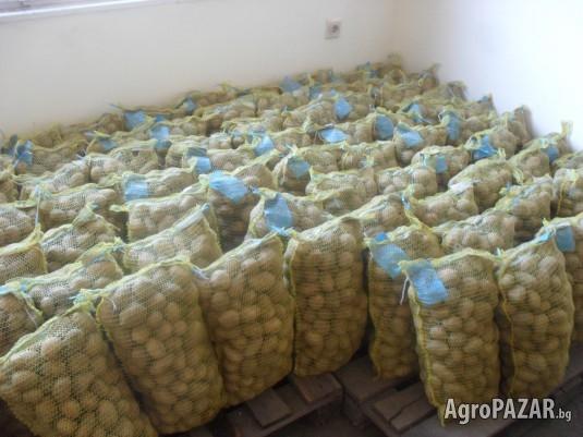Продавам семена Картофи Клас А