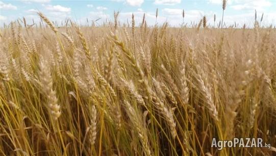 Изкупува земеделска земя - ниви, пасища и ливади